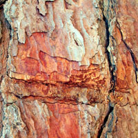 Texture Thursday: Hardwood