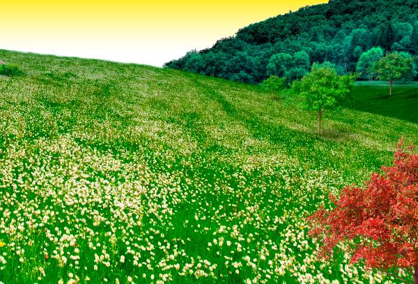 natural14 Photo Manipulate a Beautiful Sunrise Landscape