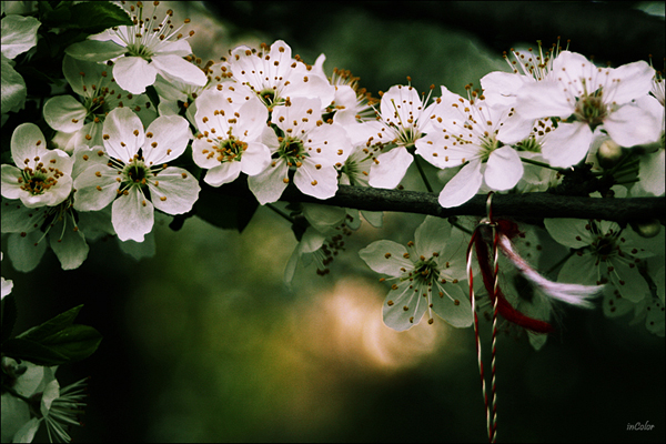 spring photography