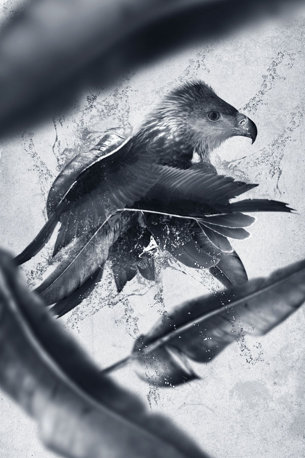 birdwork28 Members Area Tutorial: Design a Creative Bird Photo Manipulation