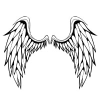 Premium Vector Pack: Wings