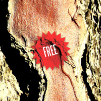 Texture Thursday: Tree Skin