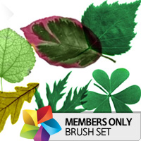 Premium Brush Set: Leaves