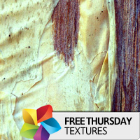 Texture Thursday: Bark