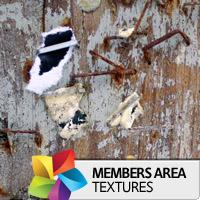 Premium Texture Set: Nail