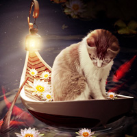Members Area Tutorial: Create a Cat in a Magical Pond Scene Photo Manipulation