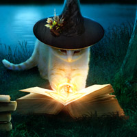 Members Area Tutorial: Create a Fantasy Halloween Witch Cat Photo Manipulation