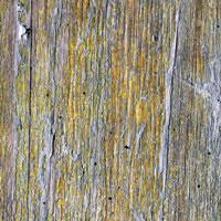 Texture Thursday: Wood