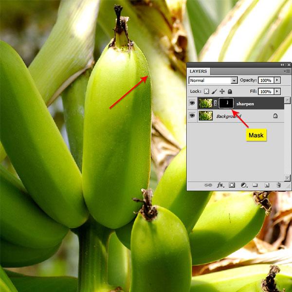Photoshop Sharpen - Mastering the Photoshop Sharpen Tool
