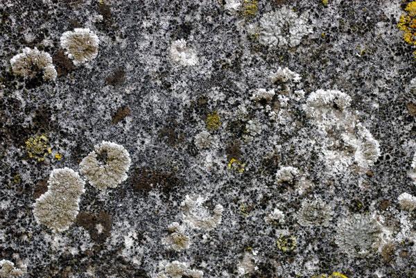 Water Rock textures