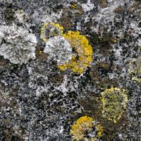 Texture Thursday: Water Rock