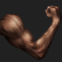 Digital Painting Lesson: Paint an Arm Using Anatomy Basics
