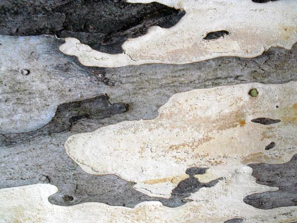 Spots textures
