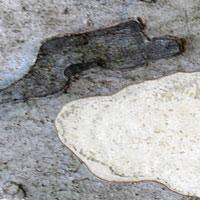 Texture Thursday: Spots